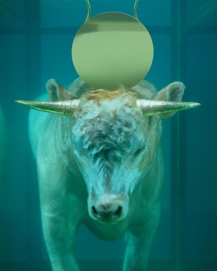 http://www.boumbang.com/damien-hirst-vs-john-rankin-waddell/ Damien Hirst, The Golden Calf, 2008 ©