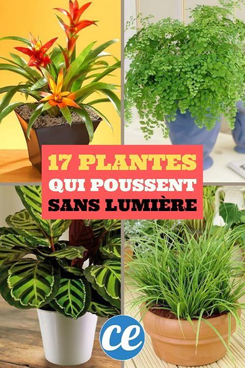 17 Plantes d'Intérieur Qui Poussent SANS Lumière du Soleil.
