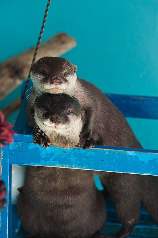 Otters know how to take a couples portrait - July 13, 2017