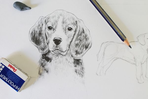 Learn how to draw animals with the brand new series of Craftsy tutorials. We are kicking things off with a detailed and easy to follow tutorial on how to draw man's best friend.
