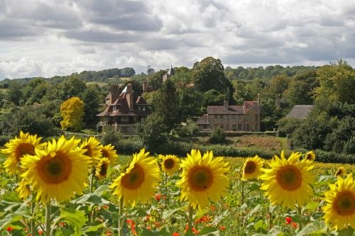 Sunflower Fields at Luddesdown, Kent, UK.  Wouldn't it be nice to have a big country manor and see this everyday?