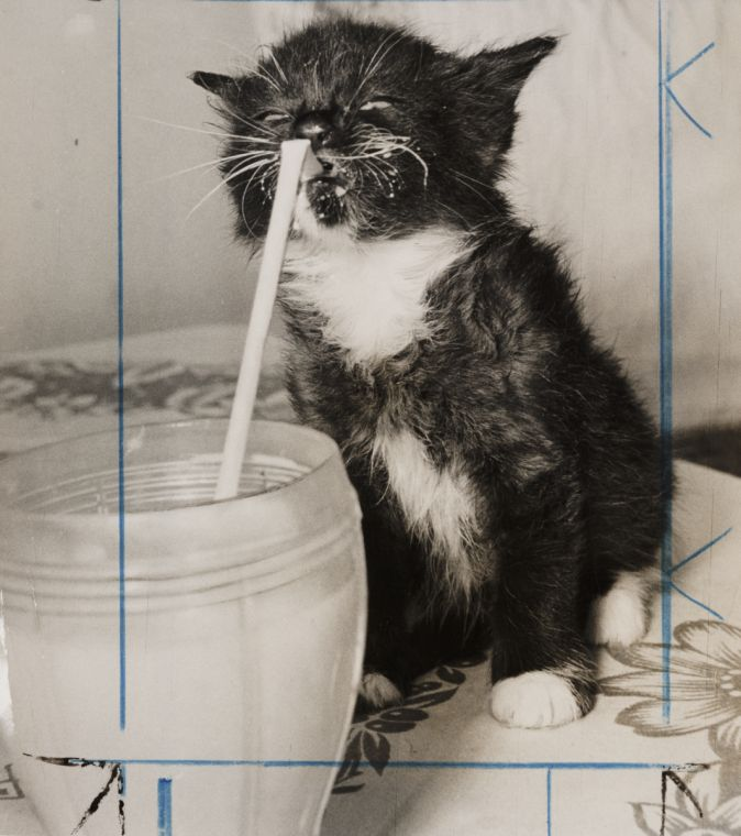 It's a kitten... drinking milk... with a straw!