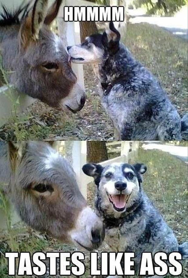 Funny Animal Pic