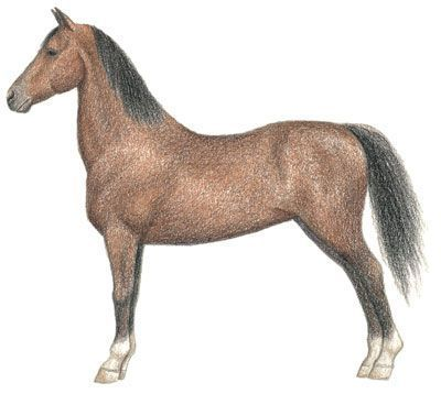 Let's talk about how to draw a horse! We'll start with basic shapes, such as circles, ovals, and triangles. Then we'll add details and color to our horse. Try these steps for How to Draw a Morgan Horse.