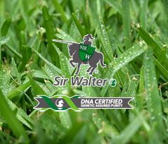 We are Sydney's number one supplier of Sir Walter Buffalo Turf. We offer luscious green lawn at affordable prices. Call or order online today.
