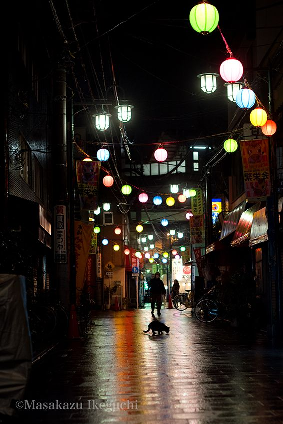 BLOG「路上のルール」 〜東京の街に暮らす野良猫たちの記録写真〜: 雨上がりの夜