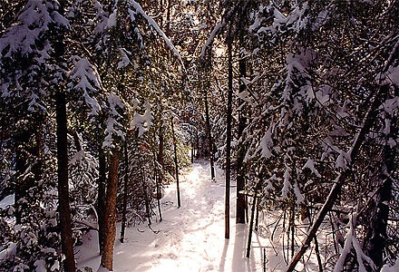 Bruce Trail - Wikipedia, the free encyclopedia