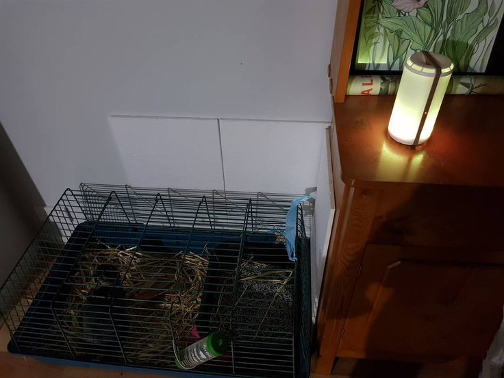 Timmy the rabbit has been waiting for his own Scentsy. But the power cord running along his night time cage was just asking for trouble. Scentsy Go provided a cordless alternative!  http://ift.tt/1MDepNZ  #scentsy #scentsygo #limitless #bunniesofig #OddballIntimidate #bunnyproof