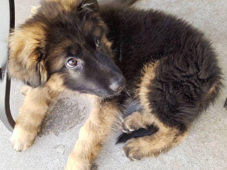 What a cutie!][x-post from /r/aww]   http://ift.tt/2jaUwVd via /r/dogpictures http://ift.tt/2j4itJD  #lovabledogsaroundtheworld