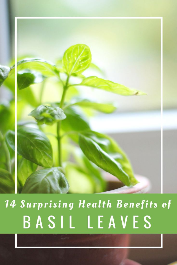 14 Surprising Health Benefits of Basil Leaves
