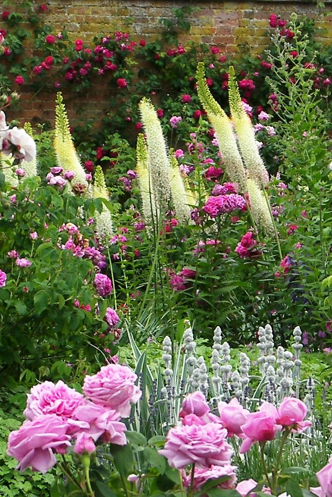 eremurs and rose: Modern Gardens, Yellow Flowers, Gardens Ideas, Cottages Gardens, Color, English Gardens, Flowers Beds, Pink Rose, Beautiful Gardens