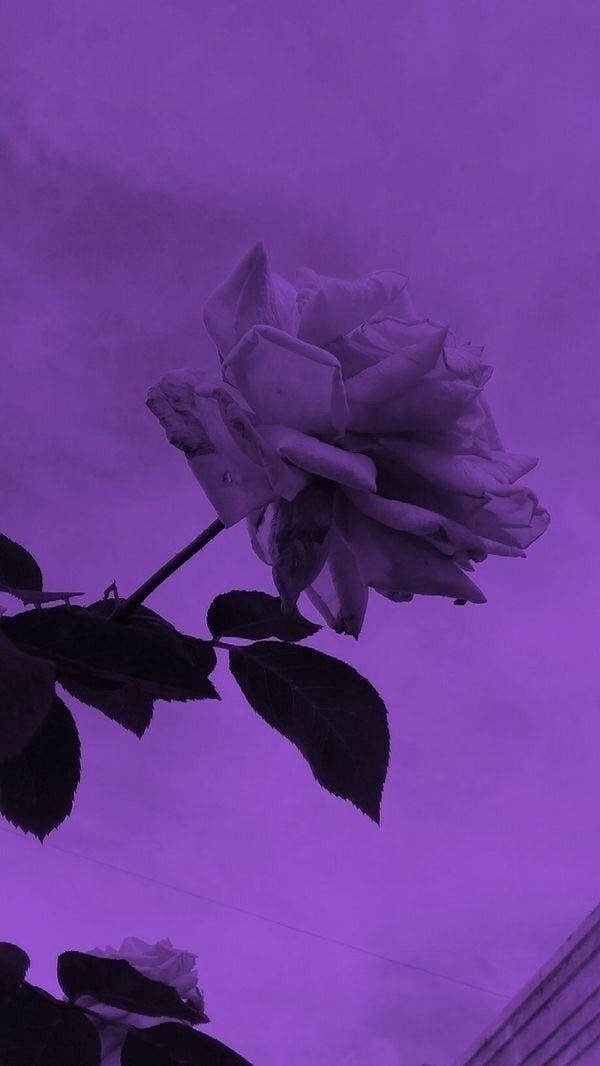 nicolemaxey purple aesthetic lavender