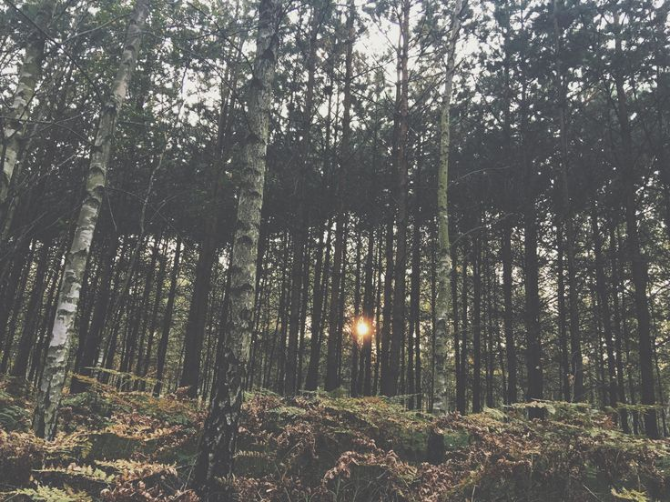 In love with the view. #forest#poland#trees#sunset