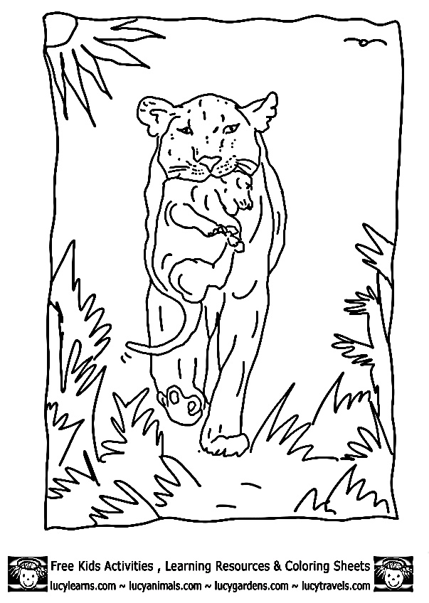 Lion Coloring Sheets Of Lioness With Cub ByCub Lion