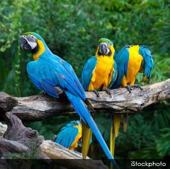 Here are 10 interesting facts about your favorite pet parrot. http://healthypets.mercola.com/sites/healthypets/archive/2013/05/03/10-parrot-facts.aspx