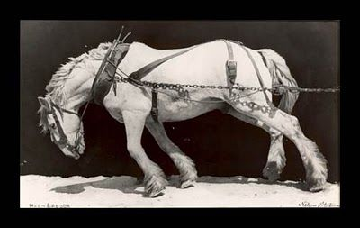 """This photo was taken of a mine horse in the early 1900's. The horse was literally blind from years of working in complete darkness. """"Often, when I have been discouraged and despondent beyond words. I have looked at this picture and said to myself. """"I will pull it one more mile.""""  With that attitude in mind and with an average amount of intelligence, any person can certainly make a success of their life in this land of free enterprise."""" -Ross Taylor"""