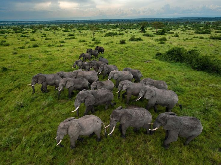 Elephants in Uganda's Queen Elizabeth Park,