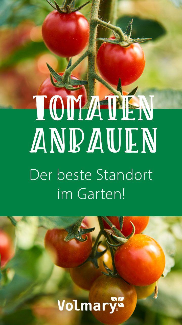 Pin Auf Tomatenliebe Tomaten Pflanzen Pflegen Ernten
