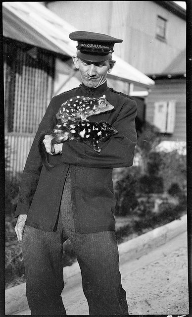 Uniformed keeper with spotted animal [quolls], Taronga Zoo, c. 1916, by Sam Hood Wales collection, via Flickr