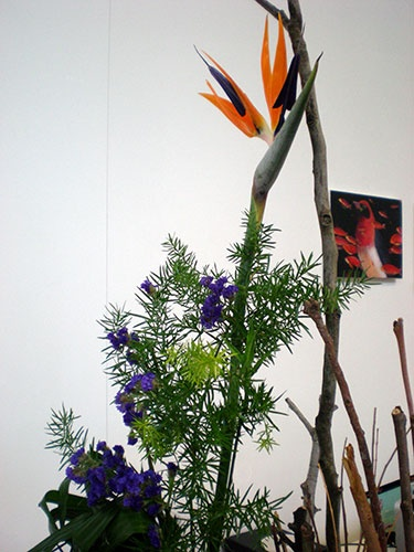 We are blessed to have an ikebana master come and do floral arrangements for us for the gallery openings.