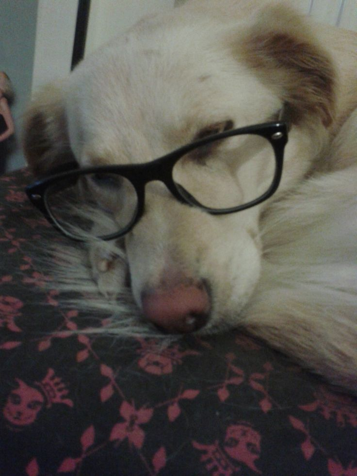 Billie Jean, the dog, loves to read!