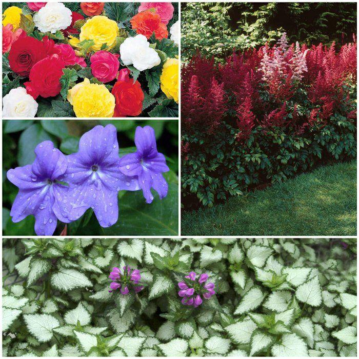 Gartenpflanzen  276 besten Pflanzenideen Bilder auf Pinterest | Dekoration ...