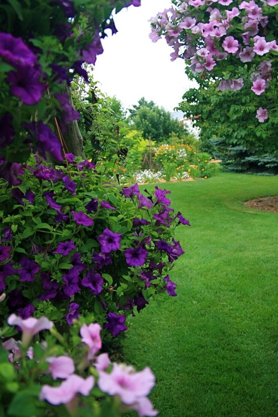 Now this is beautiful...Whimsical Raindrop Cottage, flowersgardenlove: petunias Flowers Garden Love