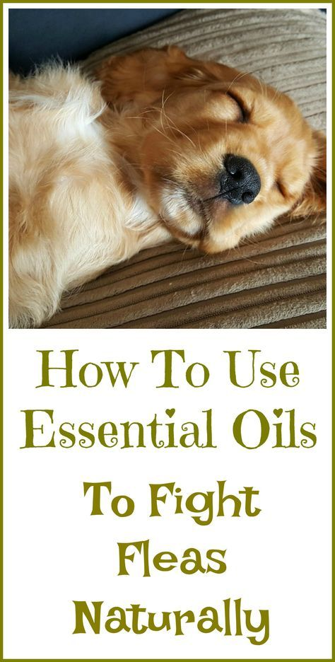 Best Essential Oil To Stop Dog Peeing