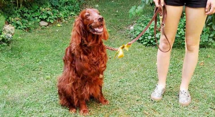 Have you ever seen a dog with a yellow ribbon? ➢ Here is what you need to know about dogs and the yellow ribbon ➢ on the Tractive Blog!