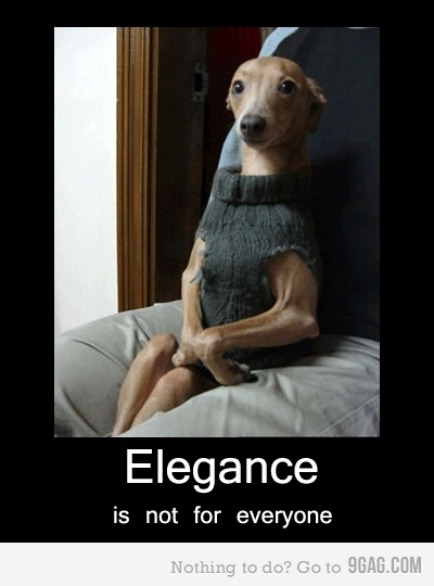 Elegance DogSweaters, Puppies, Laugh, Funny Dogs, Like A Sir, Pets, So Funny, Animal, Italian Greyhounds