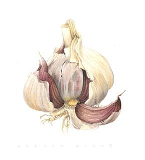 garlic - anti-inflammtory and antibacterial to ward away colds xx