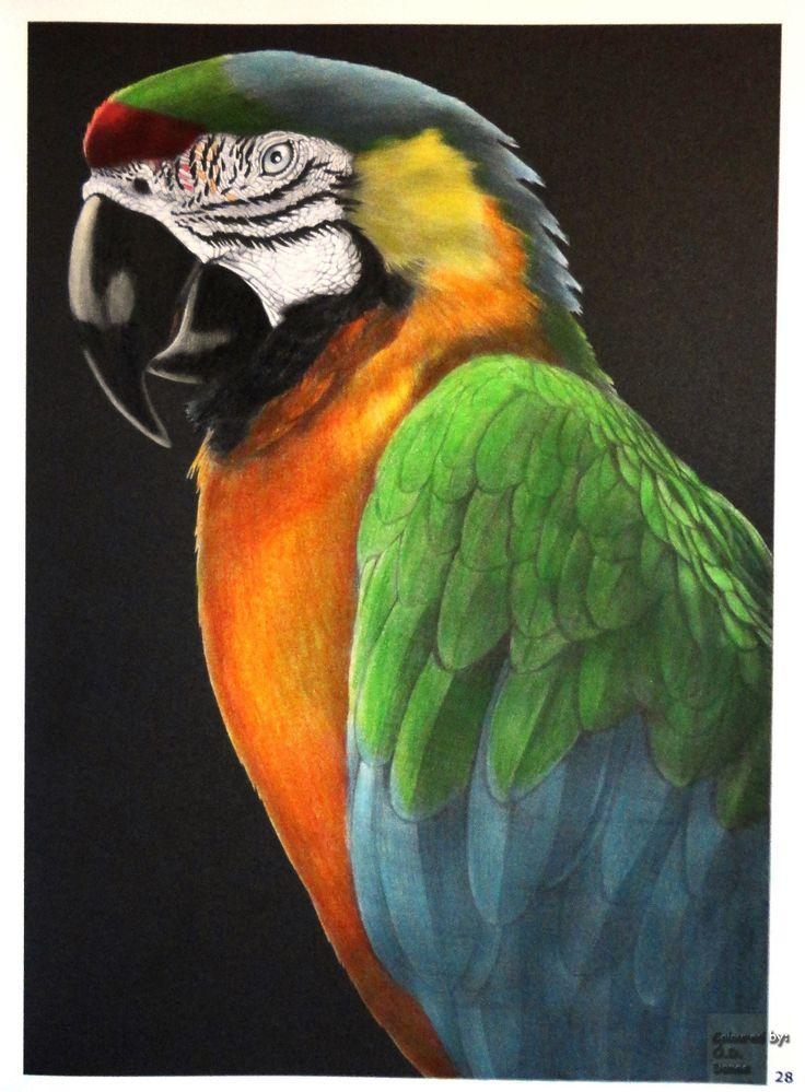 Tim Jeffs -  Intricate Ink Animals in Details volume 1  Macaw 2   Coloured with Derwent Coloursoft pencils