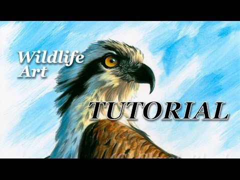 Wildlife Art Painting Lesson | Realistic Osprey - YouTube