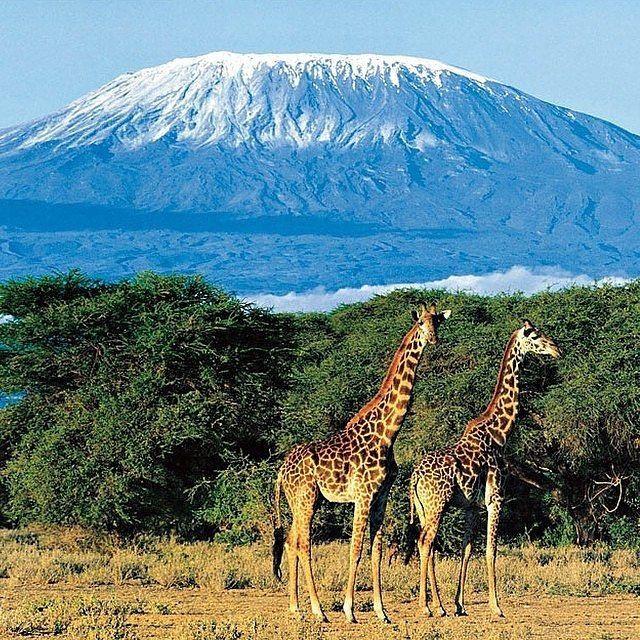 Килиманджаро, Национальный парк Серенгети, Танзания, Кения.