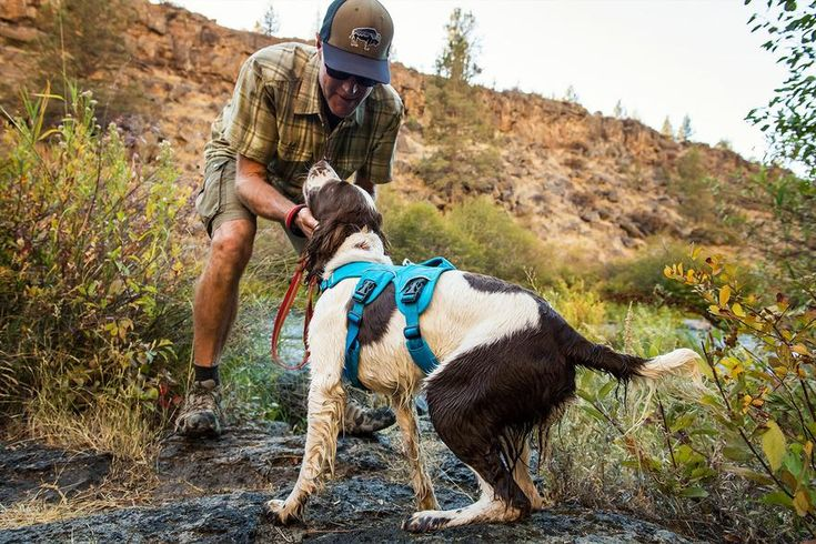 Web Master™ Harness | secure, reflective, multi-use | Ruffwear
