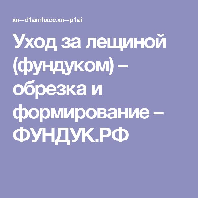 Уход за лещиной (фундуком) – обрезка и формирование – ФУНДУК.РФ