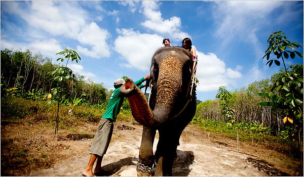 NYTimes: 36h in Phucket; Elephant trekking near Khao Phra Thaeo Wildlife Sanctuary with Bang Pae Safari