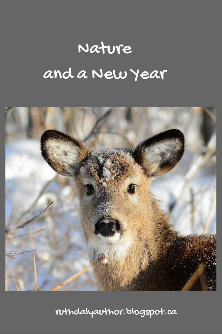 Nature and a New Year