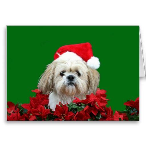 Shih Tzu Christmas Card Shih Tzu Dog Shih Tzus And Dog