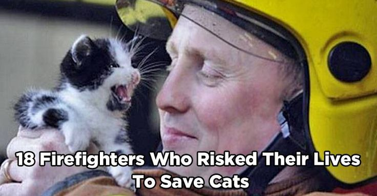 18 #Firefighters Who #Risked Their Lives To #Save #Cats  #godblessthem #catsoftwitter #catlovers #gratitude #rescued