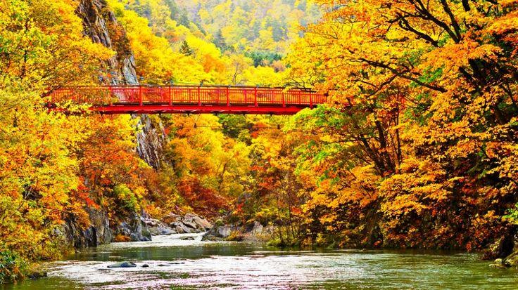 Gambar Musim Gugur Di Sungai