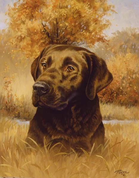 Linda Picken Art Studio / Chocolate Lab Head.jpg