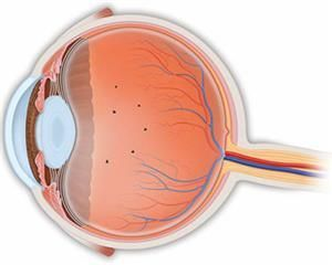 What Are Floaters and Flashes? - American Academy of Ophthalmology