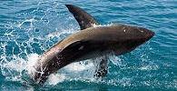 Gansbaai, South Africa ... Shark Diving
