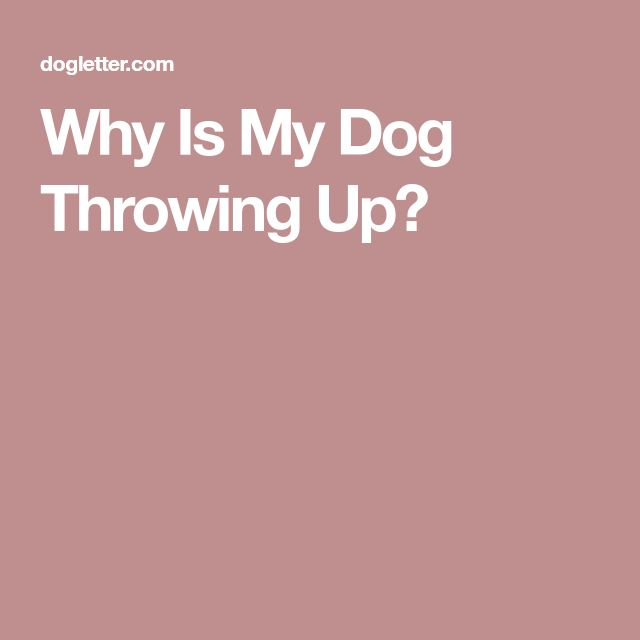 Why Is My Dog Throwing Up?