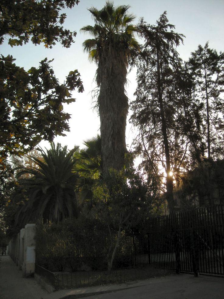 Arboles en  jardines del Liceo Manuel de Salas en Ñuñoa