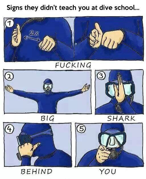 Diving Tips for the New Diver