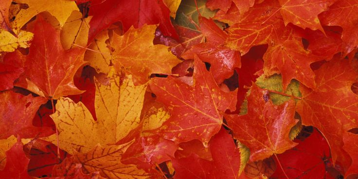 Best Fall Paint Colors - How To Decorate with Fall Colors