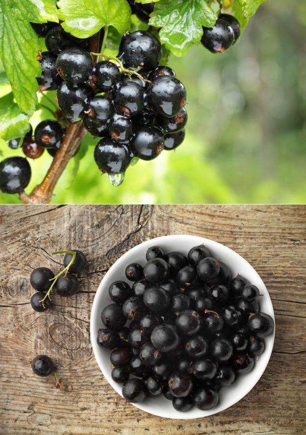 Чем и когда кормить смородину. | Сад и огород | Постила