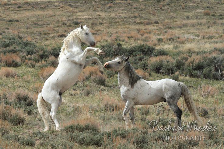 Sand Wash Basin Wild Horses B127185 Because Colorado